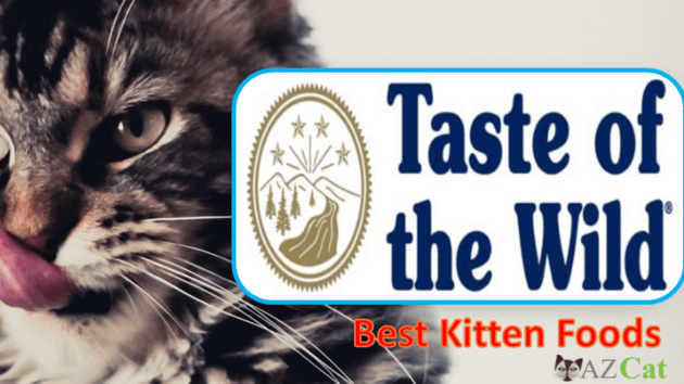 Best Kitten Foods
