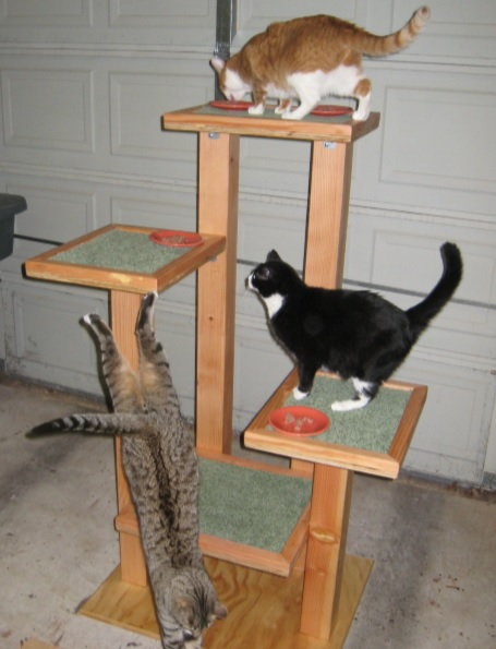 build the Shadow Cats cat trees