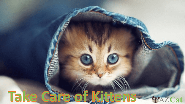 How To Take Care Of A New Kitten?
