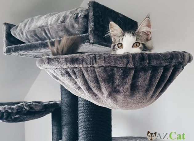 Choosing the Best Cat Trees for Large Cats