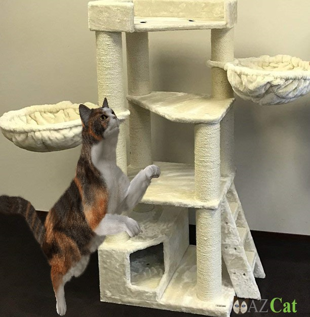Best Cat Tree for heavy cats