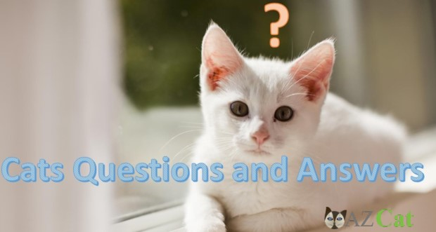 Cats Questions and Answers