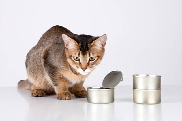 canned cat food