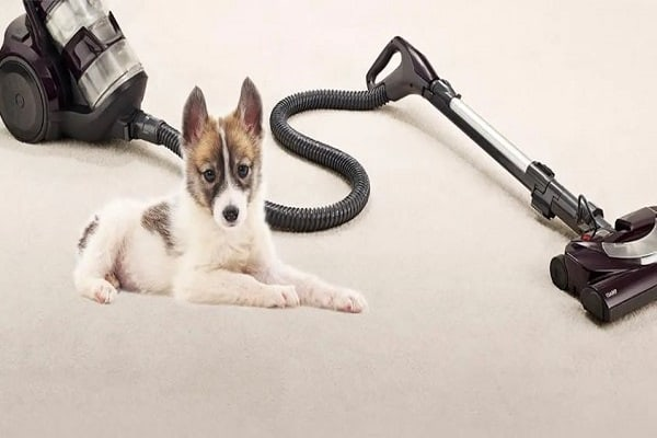 Best Vacuums for Pet Hair under $150