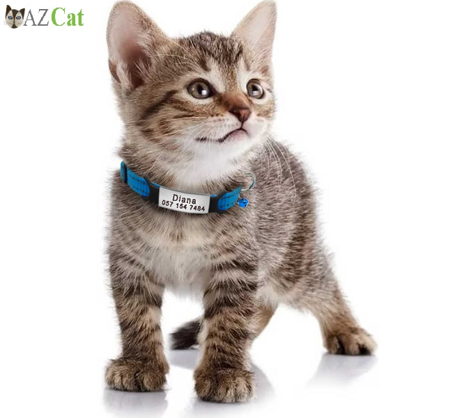The Importance of Kitten Collars