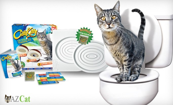 Cat toilet training, a solution to serious cat urine problem