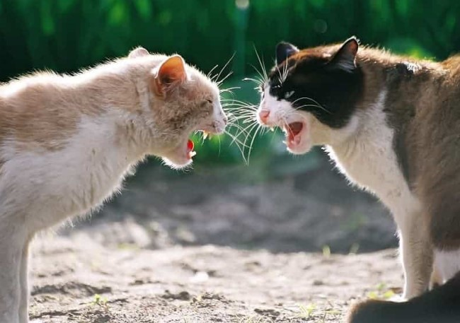 Tips on Handling Aggression Between Cats