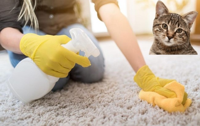 the best cat urine removers