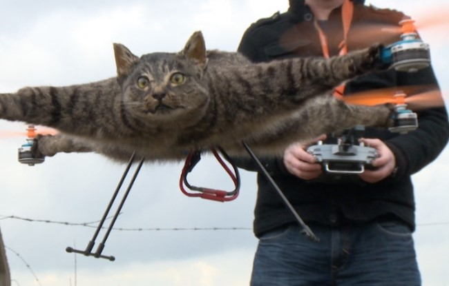 6 Tips for flying with a cat