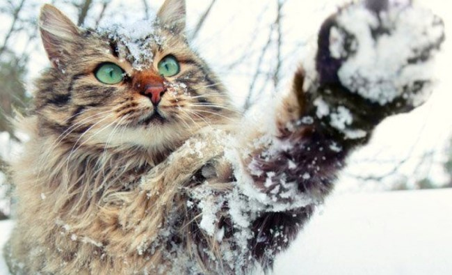 Wintertime Dangers for Your Cat