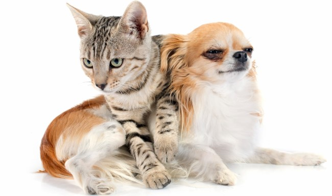 The Benefits of Spaying or Neutering a Cat