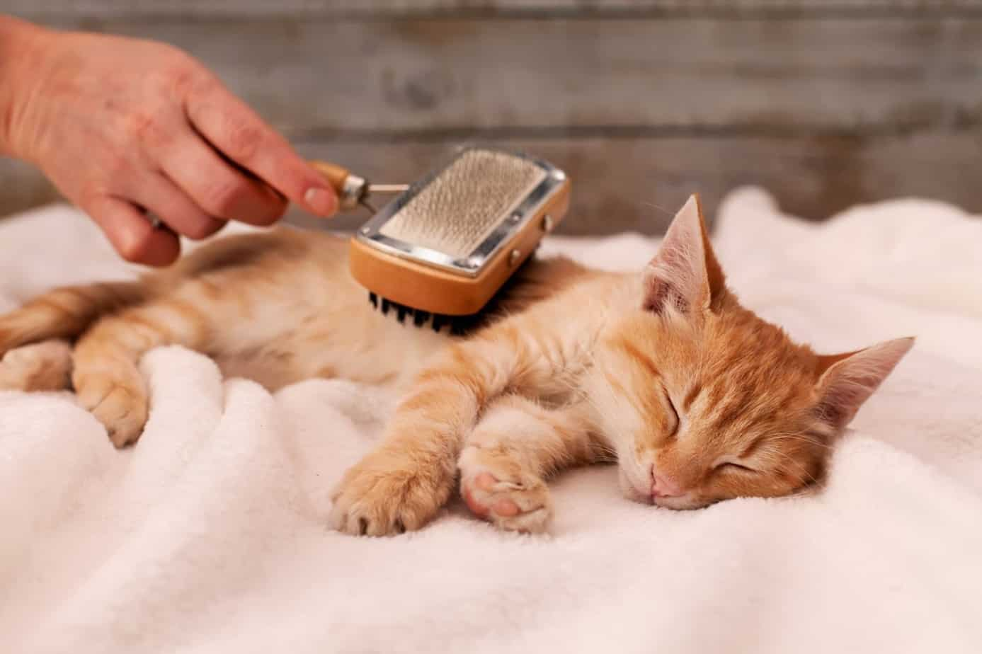 Brush your cat regularly to remove excess hair