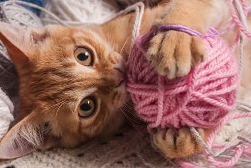 Yarn is not a safe toy for cats